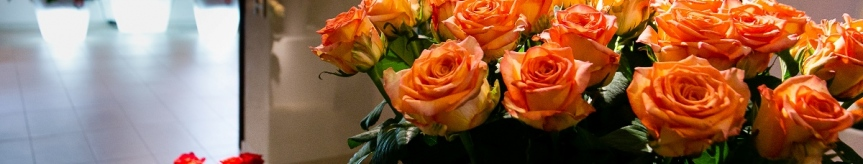 Wystawa kwiatów na Festiwalu Róż Kliknięcie w obrazek spowoduje wyświetlenie jego powiększenia